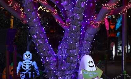 Not Too Spooky Halloween Haven
