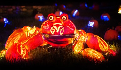 Rise of the Jack O'Lanterns crab