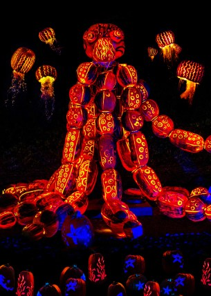 Rise of the Jack O'Lanterns octopus