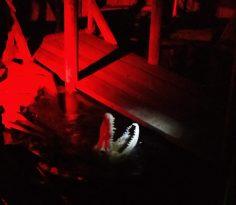 Skeleton alligator in the swamp