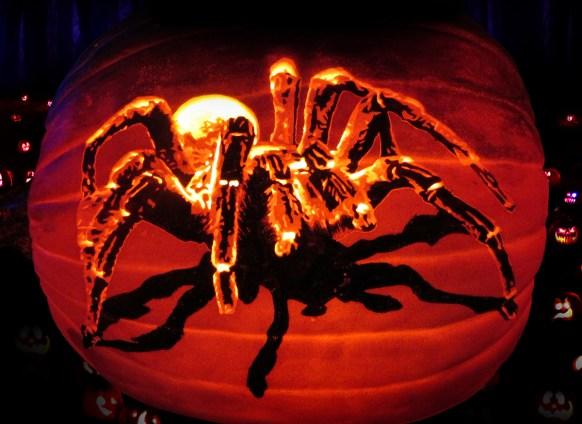 tarantula-art-pumpkin