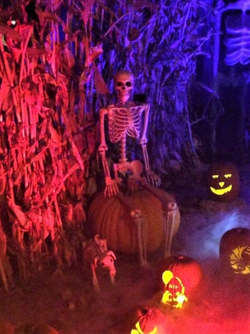 Wicked Pumpkin Hollow 2017 skeleton with dog
