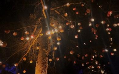 Nights of the Jack pumpkin tree