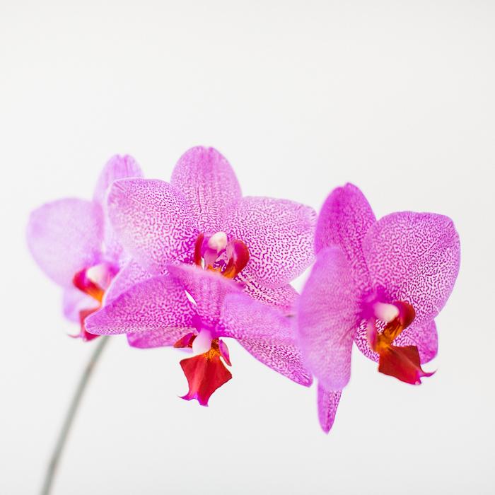 orchidee-001-2