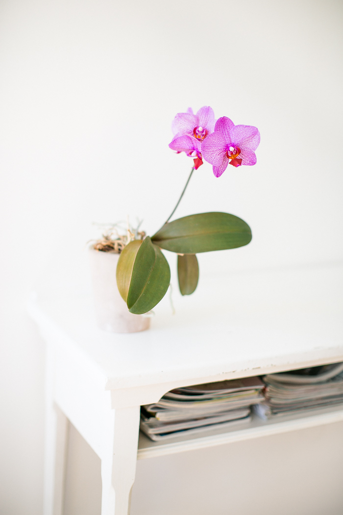 orchidee-002