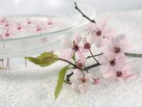 Blossoms_in_water_2