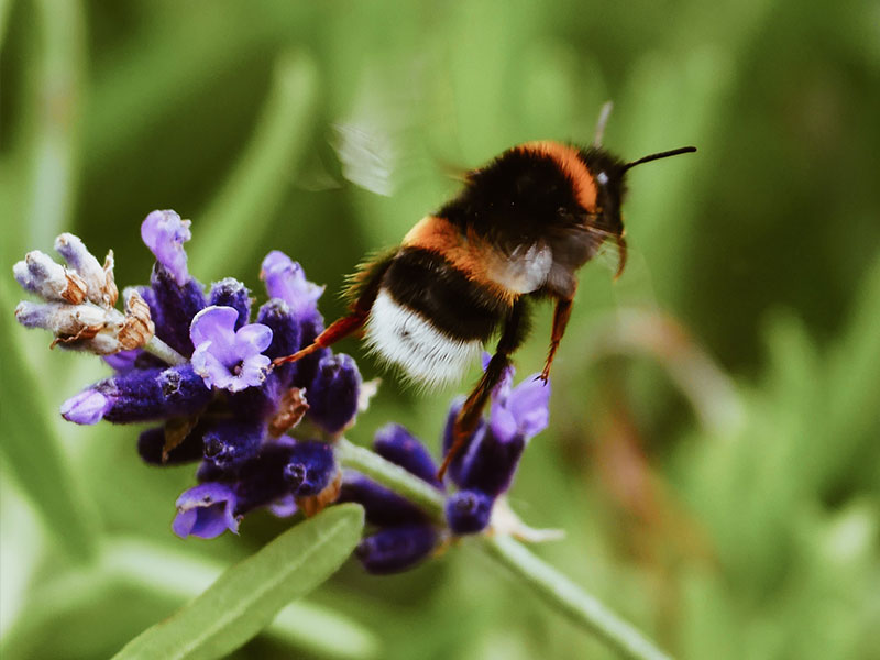 verschenke-bienenpatenschaft-10-tipps-nachhalötige-geschenke-slowli
