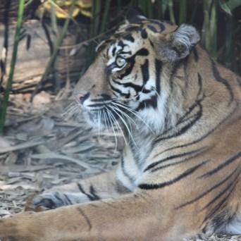 zoo (28)