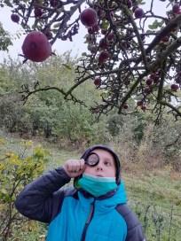 jablko (2)