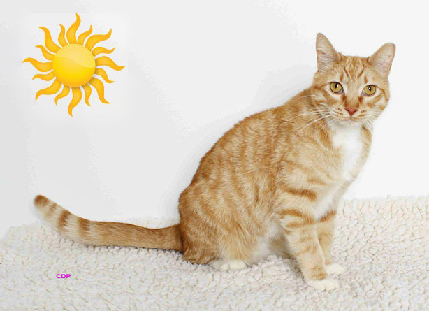 This Week at the Angels Camp CHS Thrift Store Adoption Center – SUNNY!