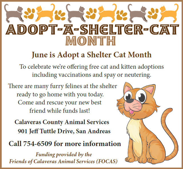 FOCAS Is Sponsoring Free Shelter Cat Adoptions In June