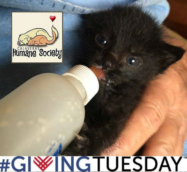 Support The Calaveras Humane Society On Giving Tuesday!