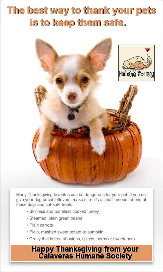 Warm Thanksgiving Wishes From Your Calaveras Humane Society