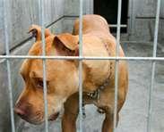 Pets-in-prison