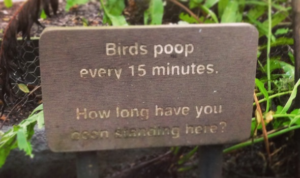 Birds poop every 15 minutes. Photography ©Dido Sargent