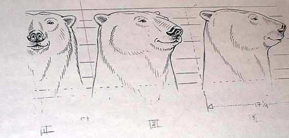 Coca Cola Polar Bears sketches