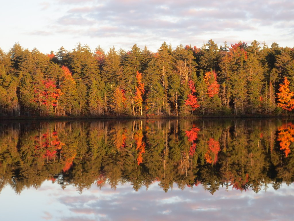 Newark FUMC Mirrored Fall Foliage photo by Nancy Schrader