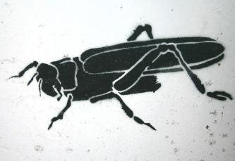 insekt02