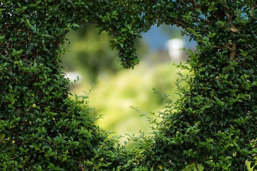 Greenery with a heart shape cut out in the middle