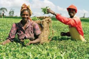 Côte d'Ivoire set to host continental agriculture summit