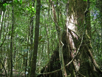 Humid forest plants | Plants of New Caledonia
