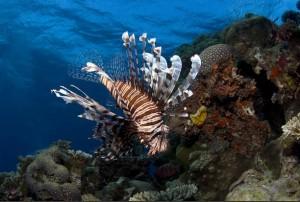 undersea3d