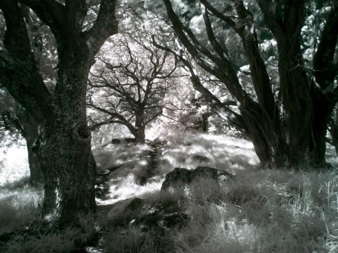 Dark fairytales - Mount Eden, Auckland