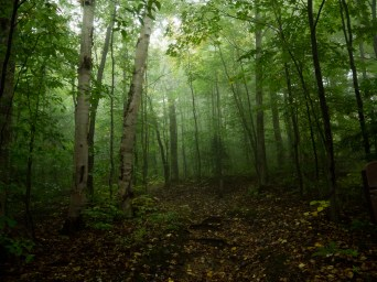 Moody forest at Underhill State Park