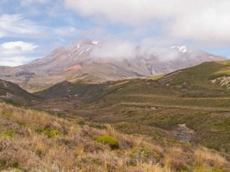 Mount Ruapehu with wildflowers