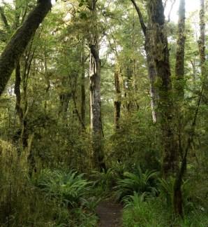 Kepler Track - Fiordland
