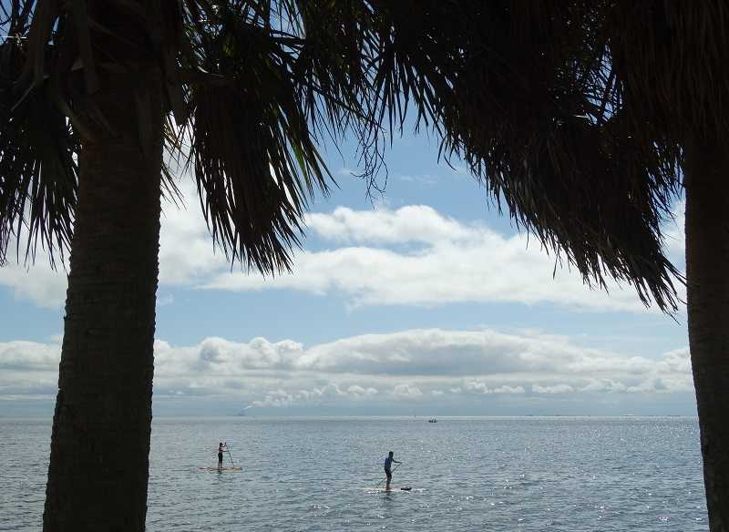 Florida paddleboarders through palm trees