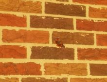 Dichotomies of the City by JSB - A monarch butterfly on a brick wall, June 2017.