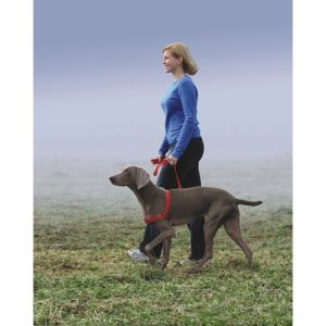 easy walk harness review