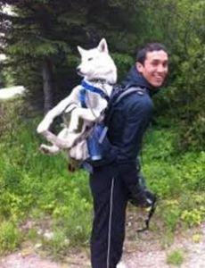 stupiddogbackpack