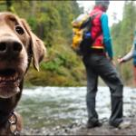 5 Must Have Items For Camping With Your Dog!