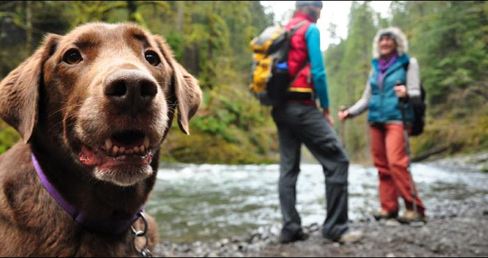 Tips-For-Camping-With-Your-Dog
