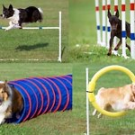 Ready, Set, Play! Five FAQs about Dog Sports