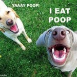 Canine Coprophagia: Poop Eating (and How to Stop It!)