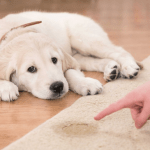 6 Common Mistakes New Dog Owners Make When House Training Their Puppies
