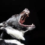 Dog Aggression?  Diagnosing Common Canine Behavior