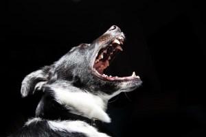 animal-dog-pet-dangerous-large