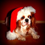 Holiday Gift Guide for Dog and Owner