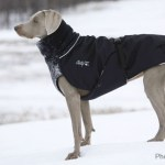 Best Winter Clothing for Dogs