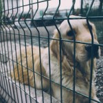 Common Reasons Owners Rehome Their Dogs