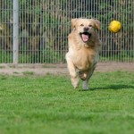 Boarding Kennel or Dog Sitter: Which is Best?