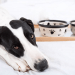 My Dog Won't Eat – Is It The Food?