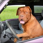 Is Your Dog Afraid of Car Rides?  Here's What You Need To Do