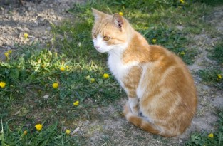 animal path healing reiki