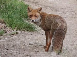 Fox Empowerment