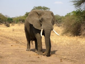 Gaja Elephant Reiki